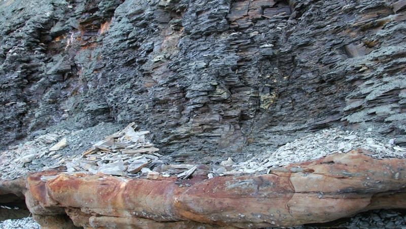 Pakri poolsaarel paljandub graptoliitargilliit enam kui nelja meetri paksuse kihina Kambriumi vanusega liivakivide peal. (Foto: Alvar Soesoo)